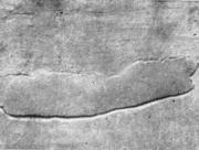 Крупная раковина на поверхности толстого листа