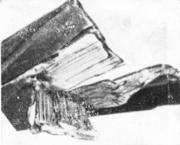Древовидный или шиферный излом на неравнополочном стальном уголке