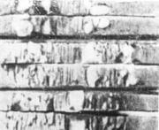 Флокены в образцах, испытанных на склонность к синеломкости