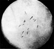 Травленый темплет на котором видны флокены