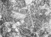 Сильно развитая сетка вторичного цементита. х 500