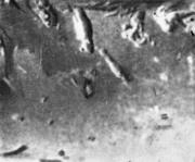 Отпечатки на наружной поверхности стальной трубы, вызванные прилипшими к валкам
