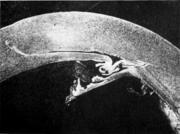 Участок трубной заготовки с раковинами на внутренней поверхности,обусловленными