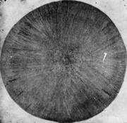 Травленый темплет круглой непрерывнолитой заготовки; видны газовые пузыри
