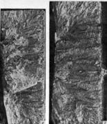 Крупные сколы в дендритном изломе литой стали. Поверхность площадок скола имеет