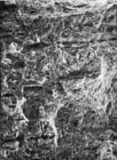Микрофрактограмма участка с мелкой шиферностью ( х 300 )