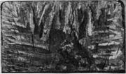 Нафталинистый излом. Образование участка равноосных кристаллов в центральной з