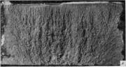 Плотный волокнистый излом. Литая сталь. По строению излом близок к волокнистому