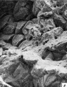 Фрактограмма участков изломов с пережогом. РЭМ. Х3000  — катаная сталь, оплавле