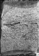Расслоения в изломе:  — катаная сталь; продольный излом, поперечная проба  едини