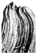 Древовидный излом. Катаная сталь после термического улучшения. Слоистое строени
