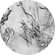 Микроструктура. Сталь для отливок легированная, цементит, перлит