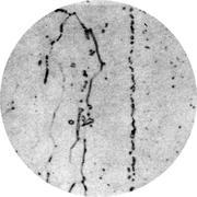 Микроструктура стали 15Х18СЮ : феррит, карбиды