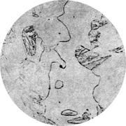 Микроструктура стали 15Х18СЮ : феррит. мартенсит