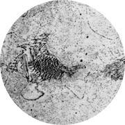 Микроструктура стали 10Х2М1 : феррит, перлит, карбиды