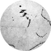 Микроструктура стали 06Х18Н11: аустенит, карбиды