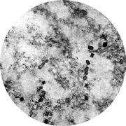 Микроструктура стали 12Х18Н10Т: аустенит,  карбиды
